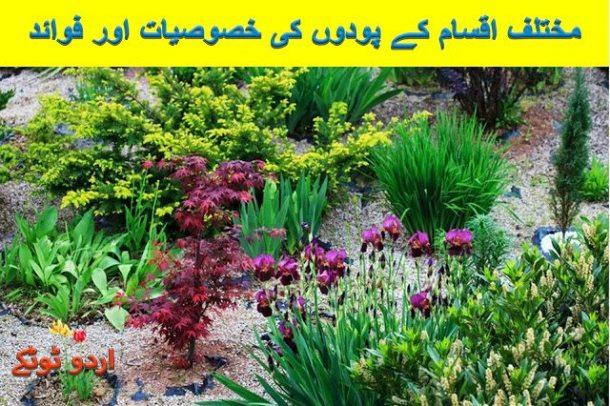 Health benefits and characteristics of plants in urdu and hindi
