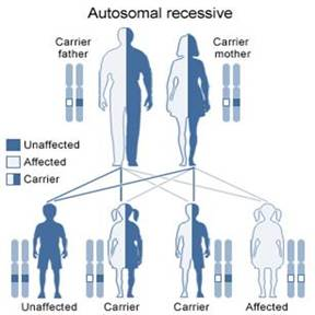 Genetics of Spinal Muscular Atrophy - About Spinal ...