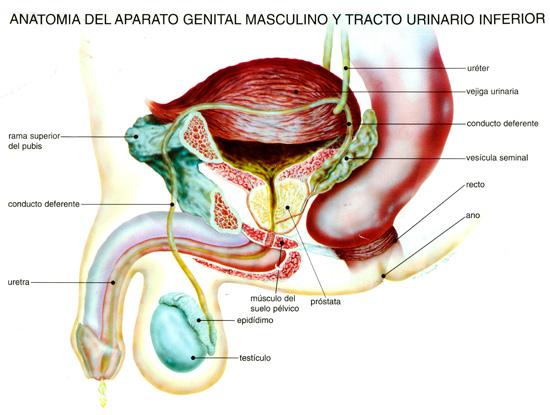 La importancia del PSA en la HBP | Urología Especializada