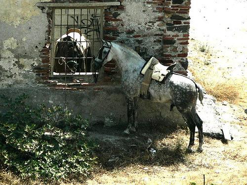 Andalucian Grey Horse