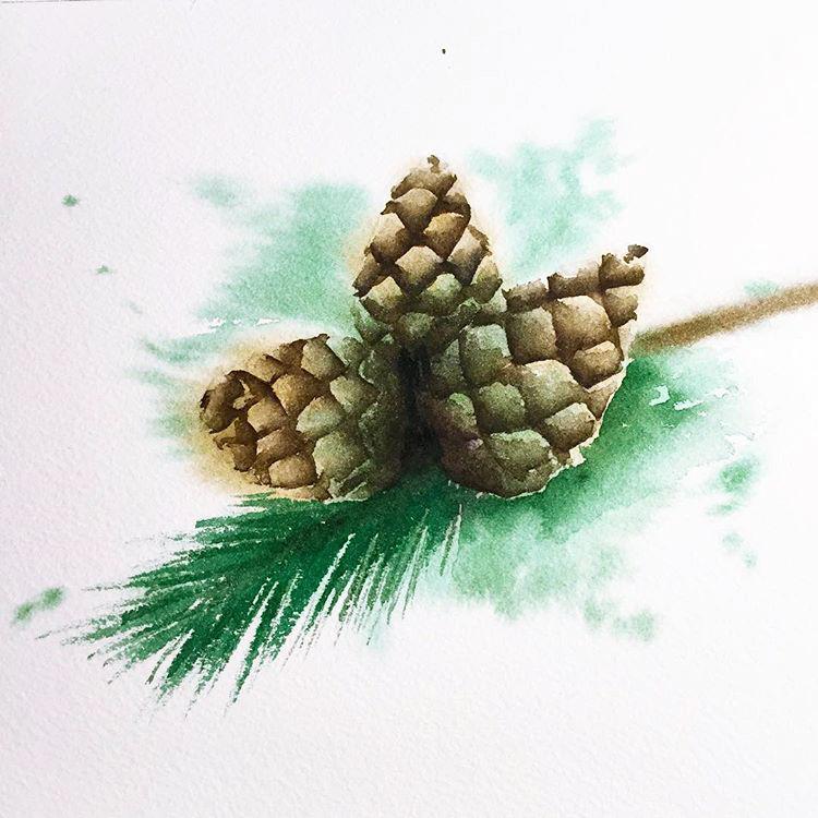 pine cone 2015