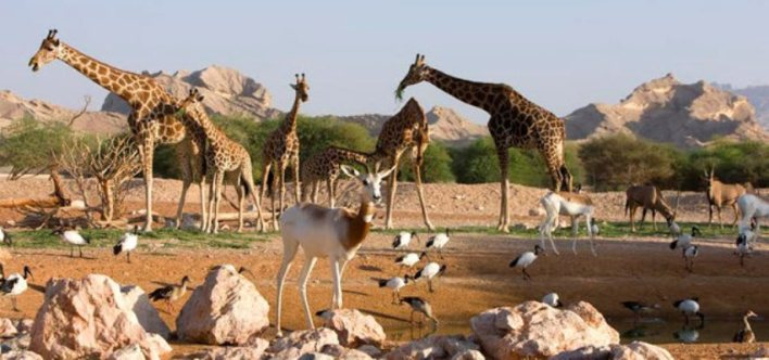 افضل 4 انشطة في حديقة حيوانات دبي الامارات - رحلاتك