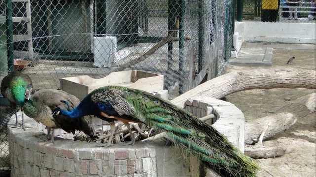 حديقة حيوانات دبي من افضل الاماكن السياحية في مدينة دبي الاماراتية