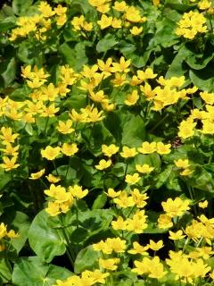 The Flowering U.P.