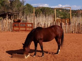 Arid Horse