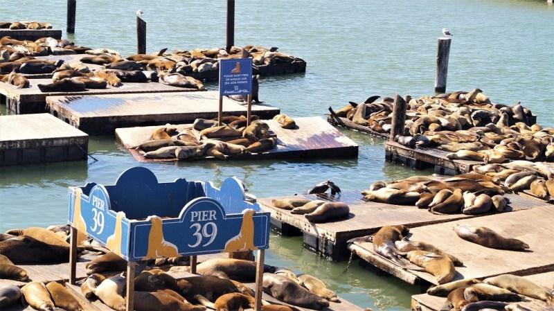 Pier 39 in Wishermans Wharf