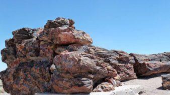 Der Petrified Forest National Park mit seinen versteinerten Bäumen