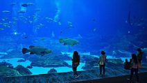 Bay Aquarium in Atlanta. (Bild: pixabay.com)