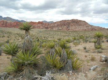 Die Mojave Wüste nahe Las Vegas.