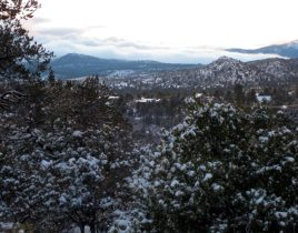 Prescott National Forest in Arizona zur Winterzeit.