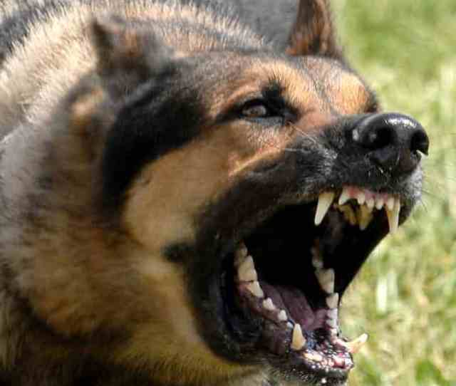 Attack By A Dangerous Dog And The Use Of Deadly Force