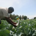 India food security and agriculture u s agency for international