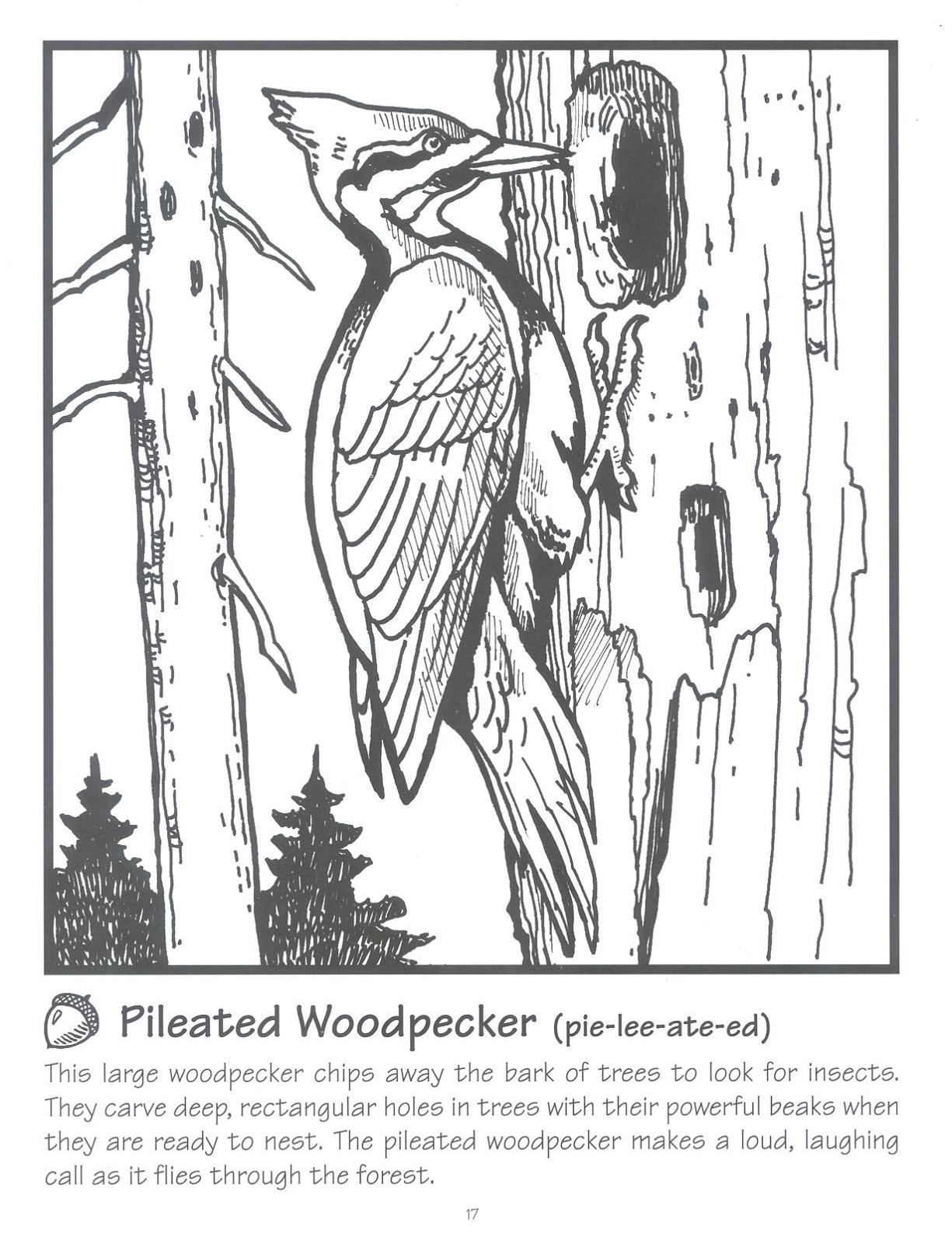 Pileated Woodpecker Page Coloring Pages