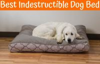 Best Indestructible Dog Bed in 2017 - US Bones