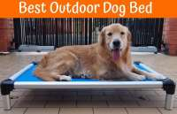 Review of the Best Outdoor Dog Bed - US Bones