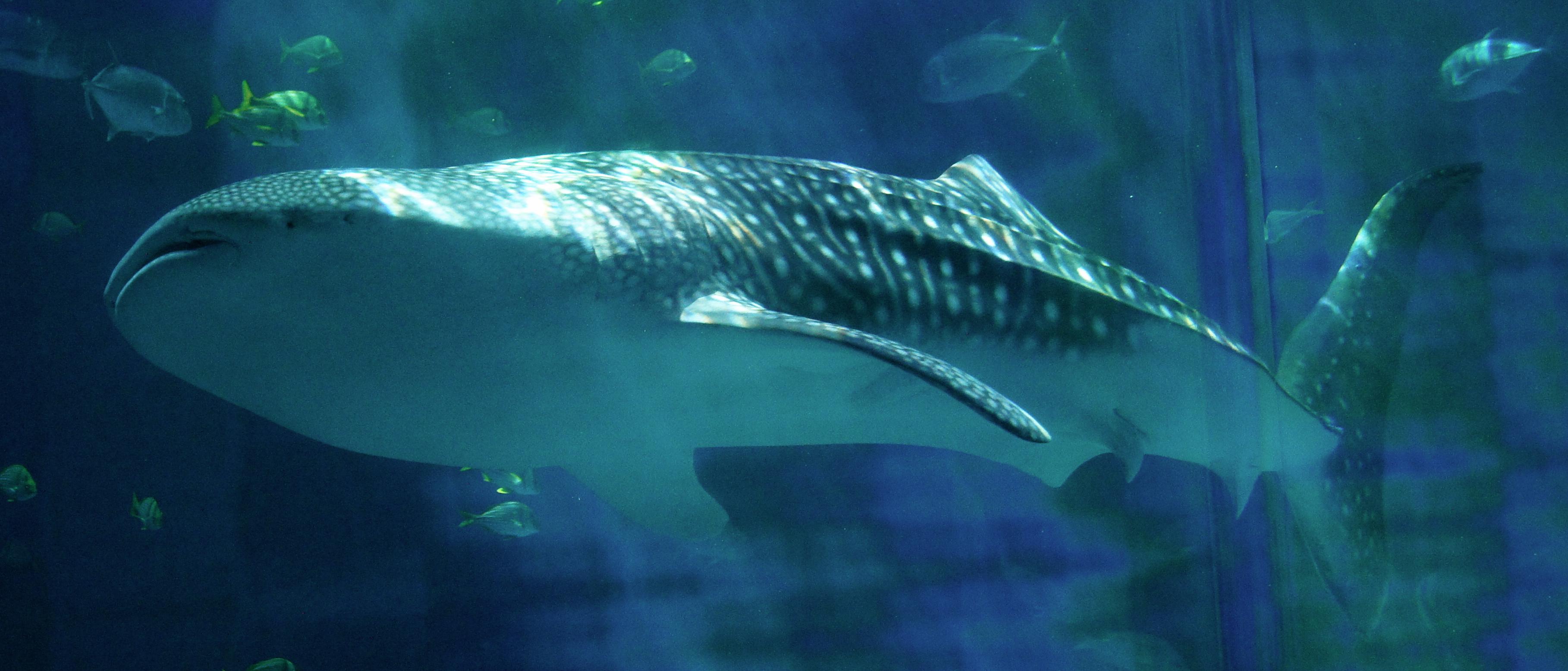 25 best aquariums in