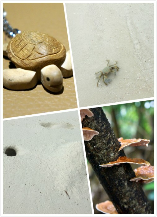 maldives_animals
