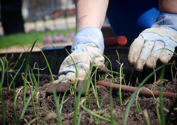 Best Gardening Blogs for Beginners to Follow