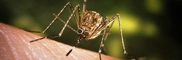 Mosquitoes prefer certain types of blood