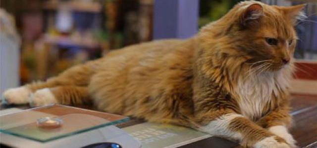 When a cat saves his owner from a near death coma!
