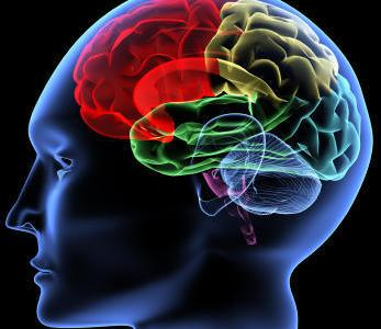 How does the human brain react to different ideology?