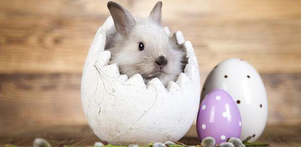 50 amazing facts about Easter! (List)