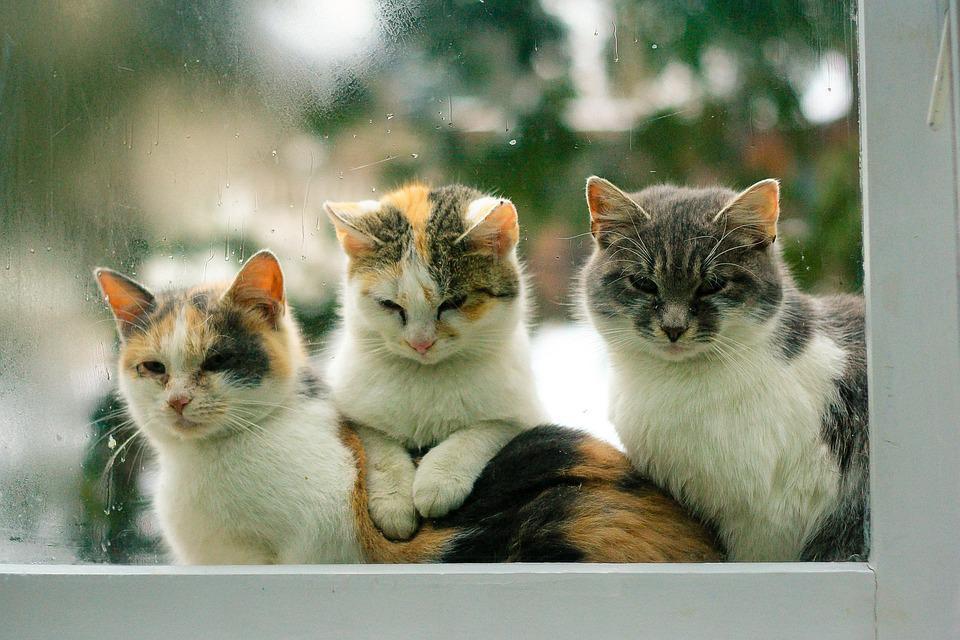 cats-1207106_960_720