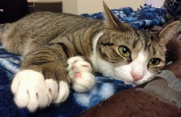 Cats: 160 interesting facts about them! | Useless Daily: The amazing