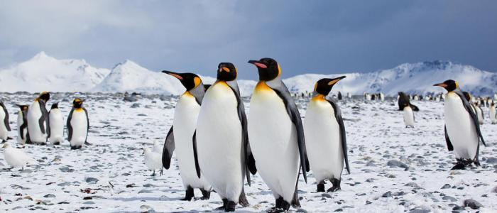 Penguins Trivia: 40 interesting facts about the animal species!