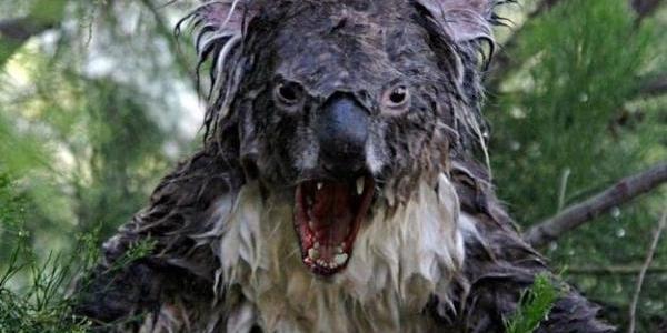 Australian Wildlife Trivia: 17 insane facts about the crazy wildlife in Australia!