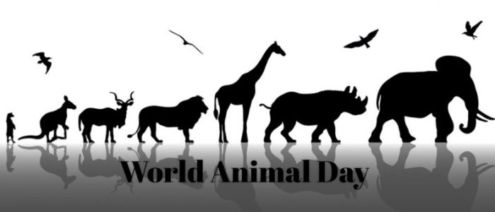 World Animal Day trivia: 34 facts about the international day