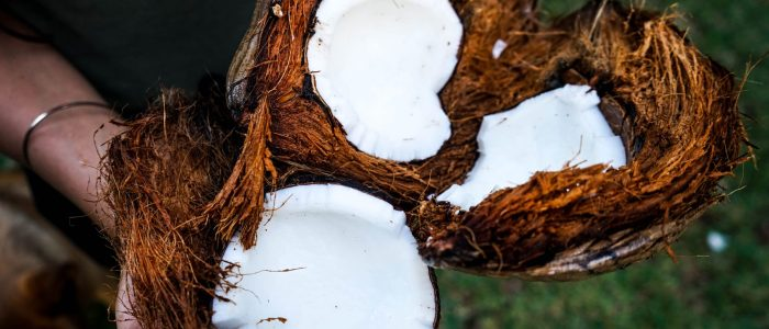 30 facts about the coconut