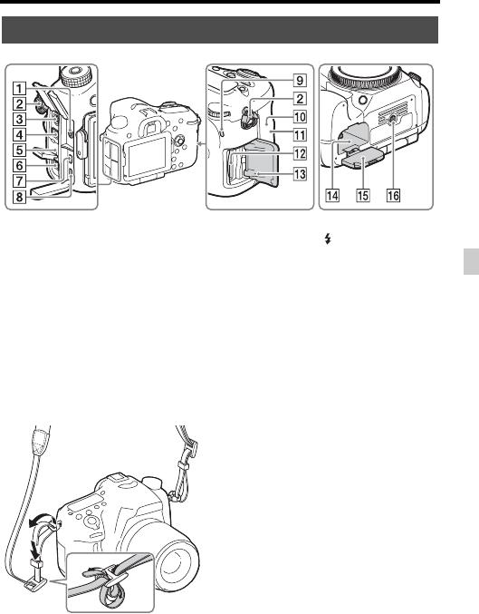 - Sony Alpha a77 II user manual