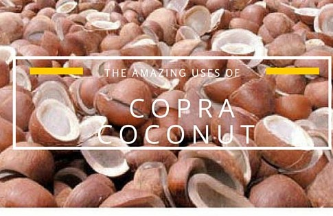 The Amazing Uses of Copra Coconut