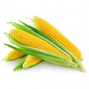Кукуруза цена – купить кукурузу оптом цена