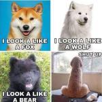 Hundliv…