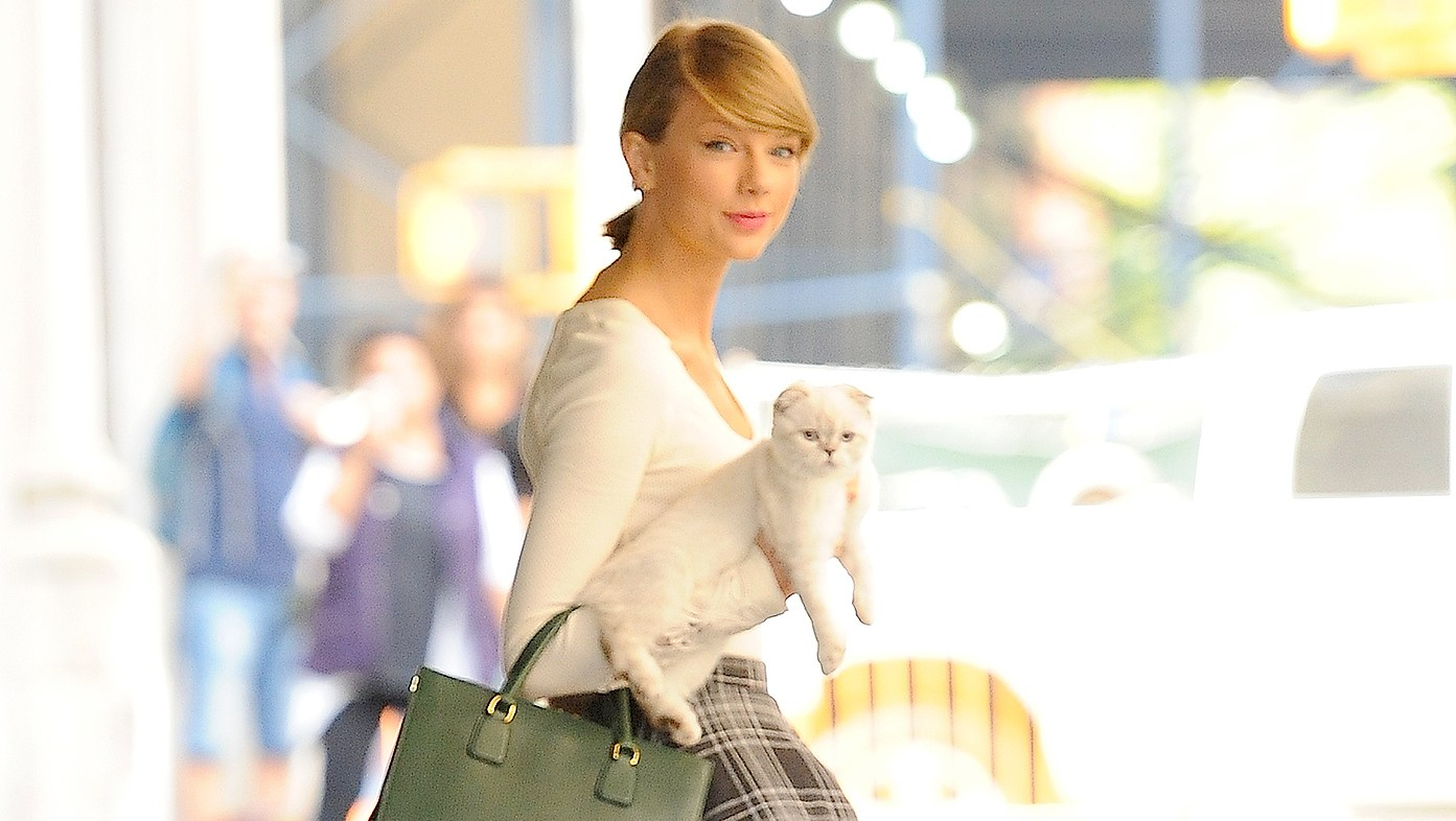 Taylor-Swift-cat