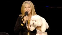 Barbra-Streisand-and-sammie clone