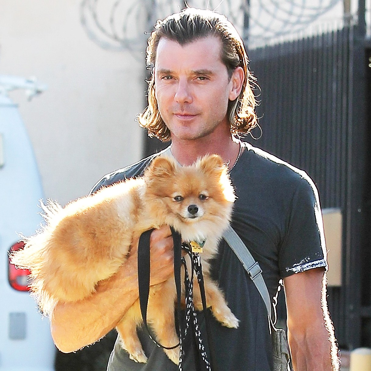 Gavin Rossdale dog Chewy