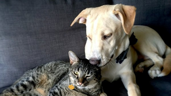 cat-dog-id-your-pet