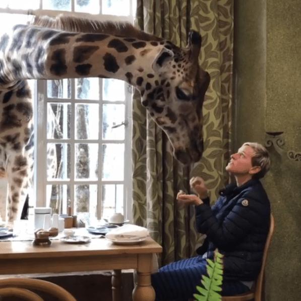 Ellen DeGeneres feeds a giraffe at Giraffe Manor in Kenya.