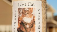 lot pet flyer poster cat