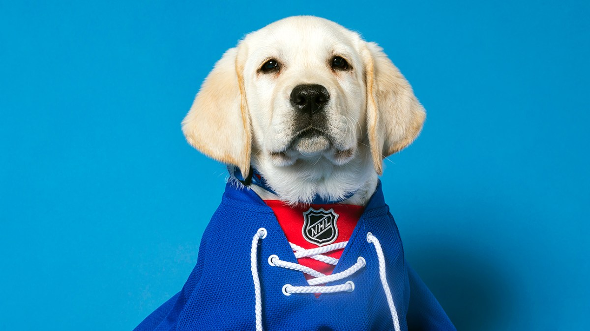 New York Rangers Are Training an Autism Service Dog 41ba2a171