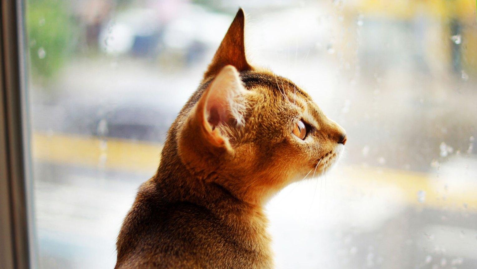 cat pets safe hurricane