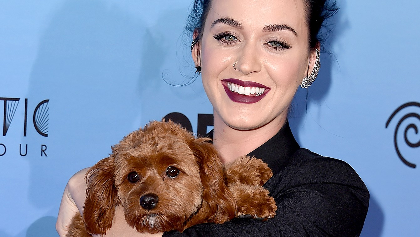 katy-perry-and-dog