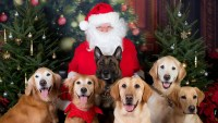 Pet-to-Pose-with-Santa