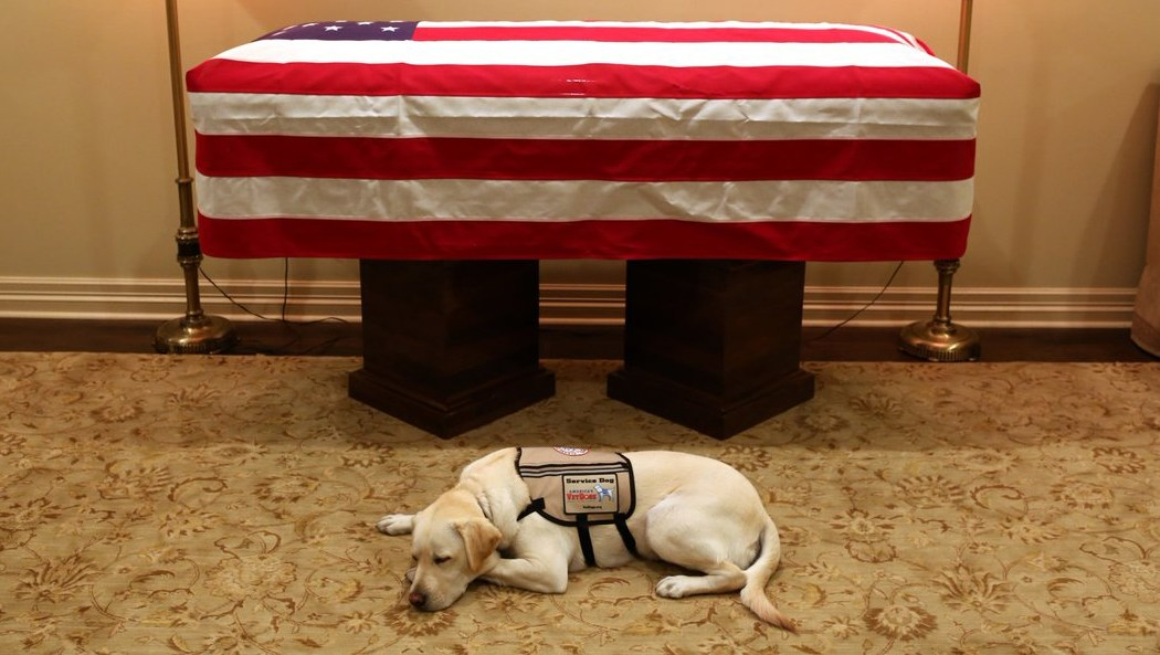 George H.W. Bush's Dog Rests Next to His Casket in Heartbreaking Photo
