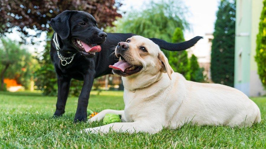 popular-dog-names-2018