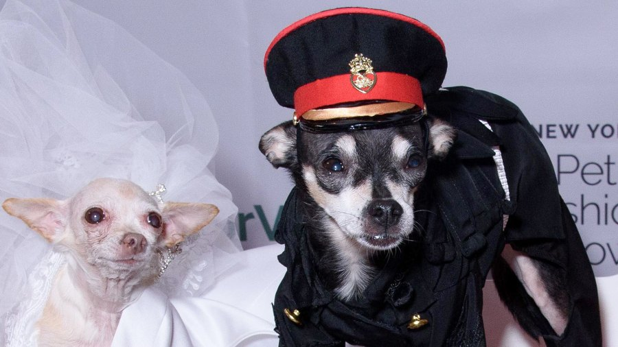 Meghan Barkle and Prince Harry of Tails Steal the Spotlight at New York Pet Fashion Show