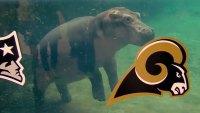 Famous Animals Predict the 2019 Super Bowl Winner